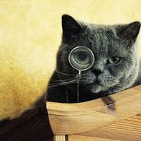OUVRONS L'OEIL CHAT